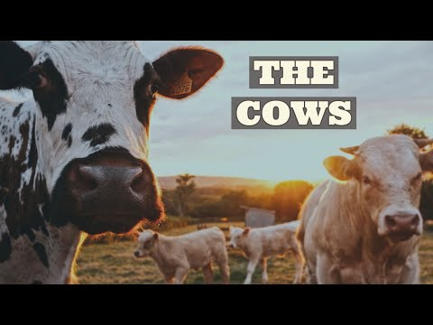 "Nathaniel Wilson ""The Cows"""