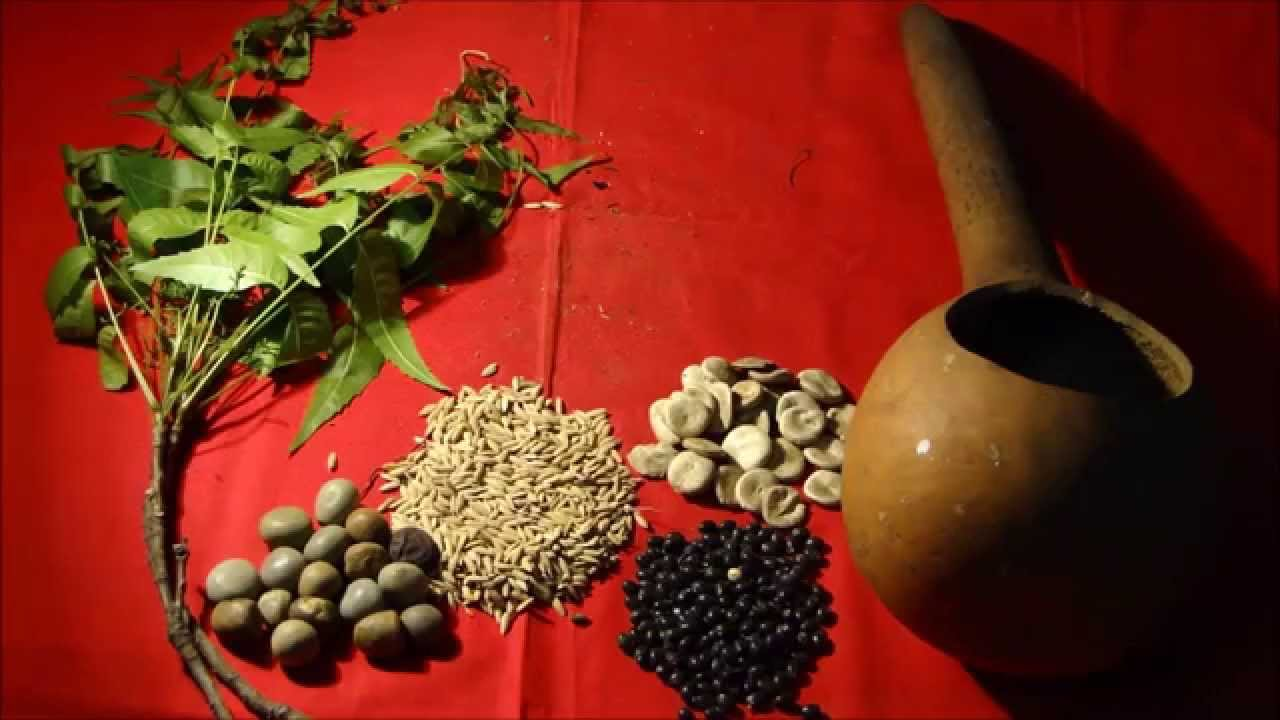 tribal medicinal plants of kambakam hills Ayush isha kolli hills - herbal medicinal plants in kolli hills located in the eastern ghats and has a predominantly tribal population of 42,000 people.