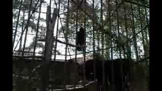 Рижский Зоопарк Птица Кондор