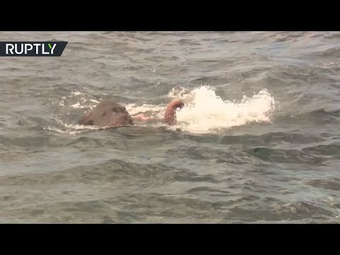 Dramatic Rescue: Drowning elephant saved by Sri Lanka Navy