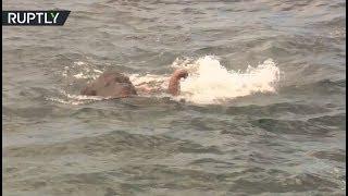 Dramatic Rescue: Drowning elephant saved by Sri Lanka Navy