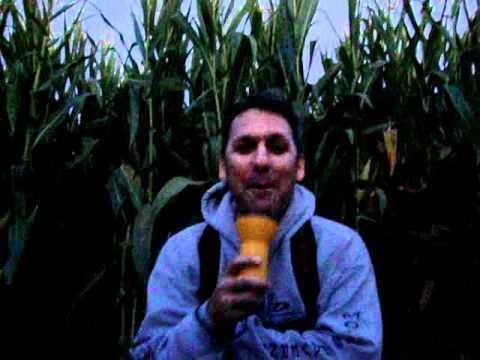 2010 Worlds Largest Corn Maze Movie, Dixon CA