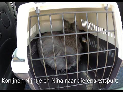 Oei oei,binnen konijnen Nina en Nijntje naar dierenarts! Snik…..
