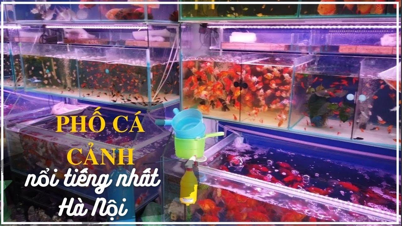 Phố CÁ CẢNH THỦY SINH nổi tiếng nhất Hà nội | Aquarium fishes in Vietnam