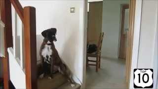 Ржачное видео про животных. Животные и снег.