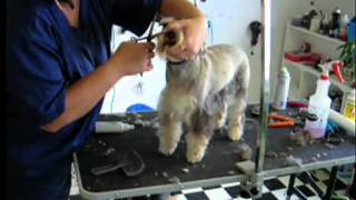 St louis do it yourself wash and pet groomer
