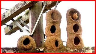 vuclip Natural Architecture: The Bird's Nest - HD Documentary