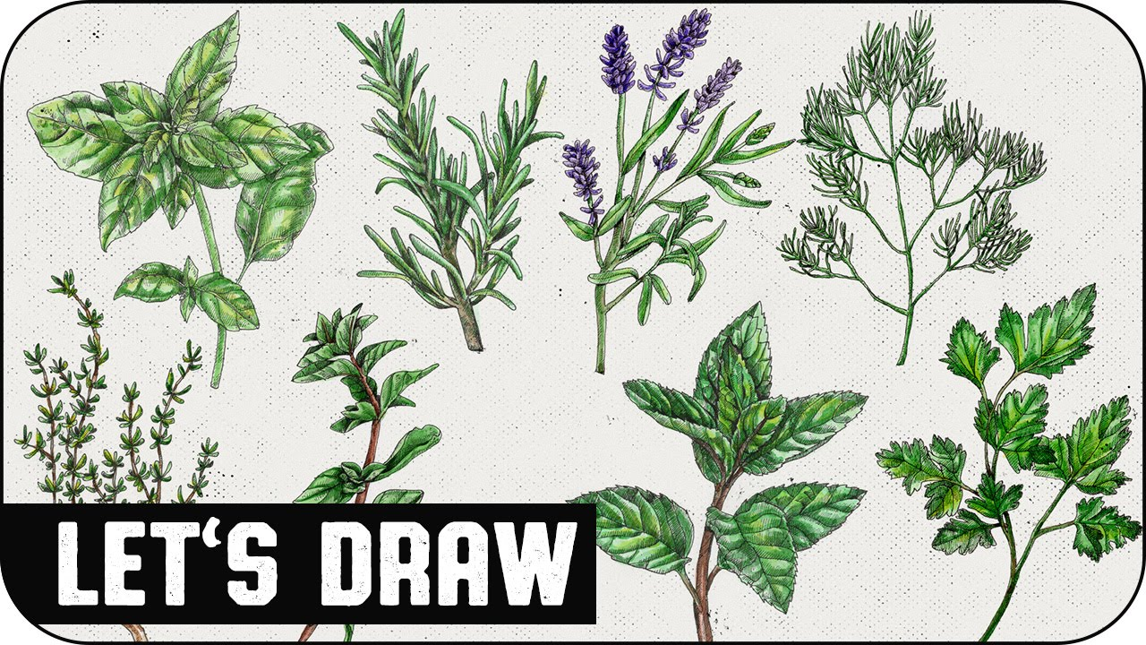 let s draw herbs speed painting voidea [ 1280 x 720 Pixel ]
