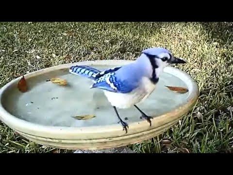 Backyard Birdbath Time Lapse  - A Day of Birds in Two Minutes!