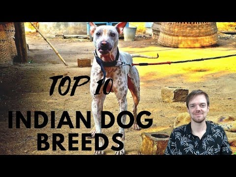 TOP 10 Indian Dog Breeds