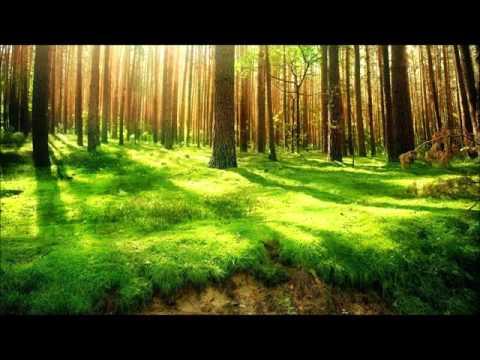 Bon Iver - Woods 3 Hours