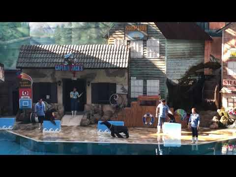 Sea lion Show marine park bangkok safari world
