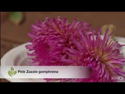 Growing Gomphrena | Trisha Shirey | Central Texas Gardener