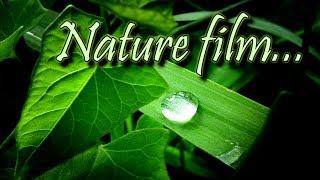 Nature Film... Beautiful Natural Places