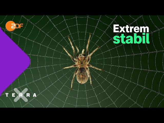 Warum Spinnenseide so besonders ist   Terra X plus