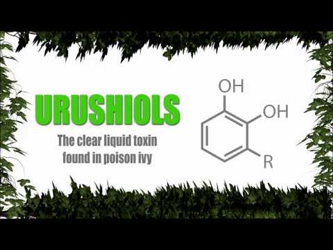 Poison Ivy and Oak: Medicinal Cure and Chemical Weapon