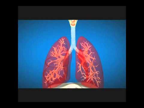 Our respiratory system in bengali language youtube our respiratory system in bengali language ccuart Gallery