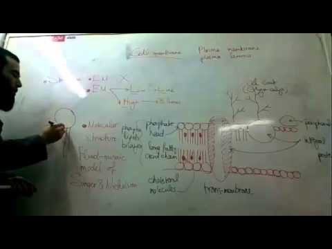 1- Introduction & cell membrane (Histology is easy)