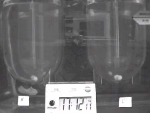 Vegecap HPMC size 1 10mcg in 900mls 50hrs not gelatin capsule