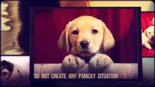 Puppy Training Tips For the First Week | Puppy Potty Training Tips | Tips For House Training a Puppy