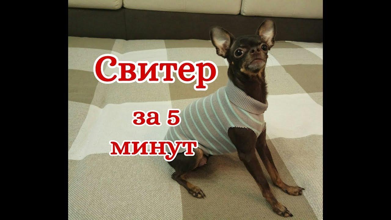 Свитер для собаки и кошки за 5 минут - YouTube