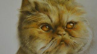 Как рисовать кота(Как рисовать кота можно узнать из короткого видеоролика. Замечательную рыжую мордашку в технике сухая..., 2016-05-04T20:18:07.000Z)