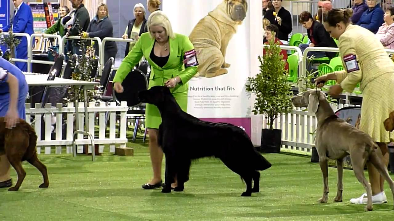 National Dog Show Best In Show