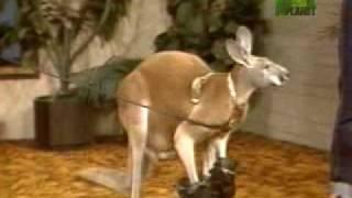 Kangaroo Goes Berzerk