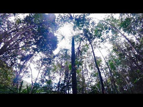 Parque Nacional Alejandro Humboldt - by Villa Paradiso Baracoa