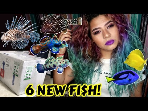 UNBOXING THE MOST EXPENSIVE RARE FISH IVE EVER OWNED! (SALTW