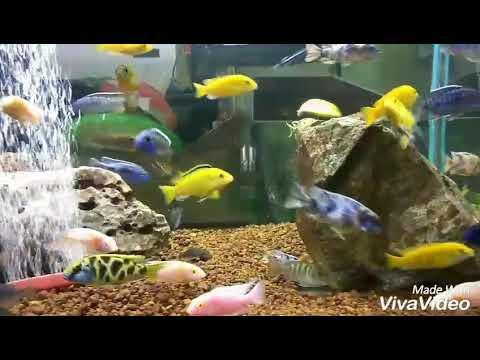 Creative aquarium Bangalore