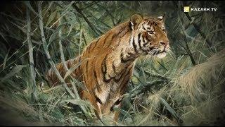 Загадки и сила Туранского тигра