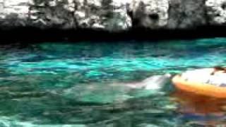 Dolphin pushes boat to safety Thumbnail
