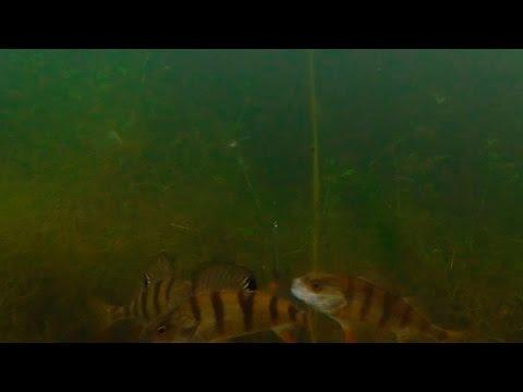 зимняя рыбалка на окуня - 2016-03-24 13:11:28