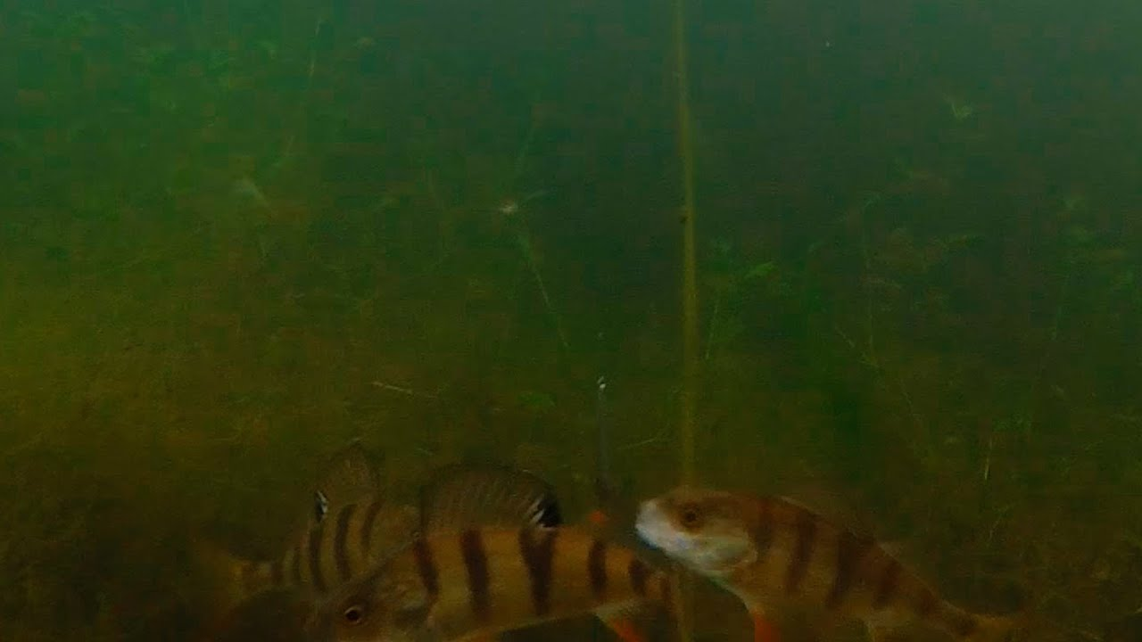 видео под водой на рыбалке чем снимать