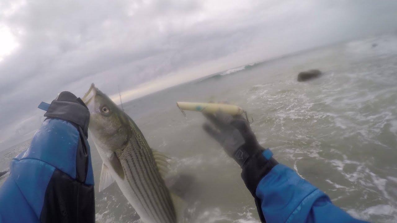 d148a6832d023 Pencil Popper Blitz Surf Casting Montauk. 09 20 16. FishAholic Fishing