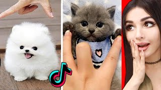 The CUTEST Animals On Tik Tok 2