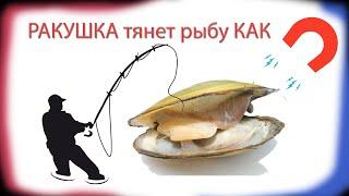 Лучшая наживка - РАКУШКА - обловила...    Из реанимации на рыбалку.#лучшаянаживка#ловит