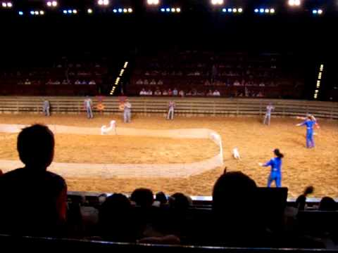 Dolly Partons Dixie Stampede Pig Racing Youtube
