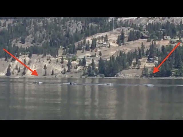 Graban al legendario monstruo Ogopogo en un lago de Canadá