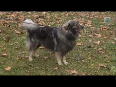O živalih in ljudeh - TV Maribor 19.1.2013