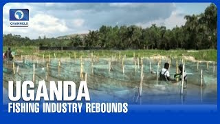 Uganda Fishing Industry Rebounds