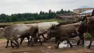 Обзор фермы. Любительская съемка. Часть 1