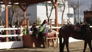 年末のどうぶつ王国(神戸市)に行き、乗馬体験をしたモゾ君、小さいポニ...