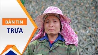 Lào Cai: Nông dân 'phát điên' nhìn dứa thối nhũn | VTC