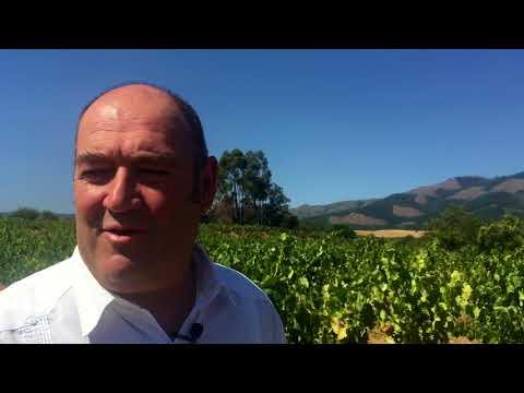 How does Chilean Carignan and Priorat taste? Winemaker interview with Fernando Almeda