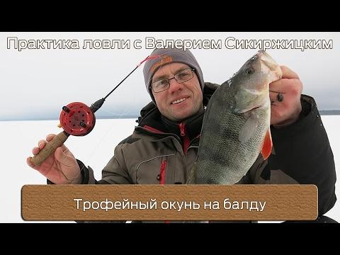 Трофейный окунь на балду : Практика ловли с Валерием Сикиржицким