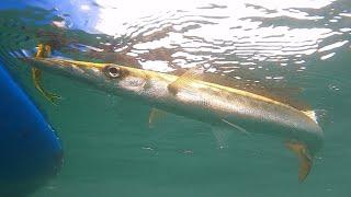 Drift fishing with soft plastics   Victoria   Australia