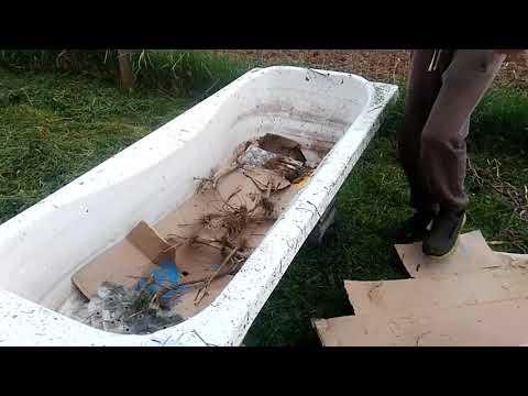Cum obtinem un fertilizator natural pe baza de rame