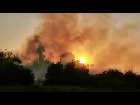 VÍDEO: Incendio en una parcela junto al polígono Pilar de la Dehesa